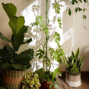 Wild Talk - La cura delle piante in primavera. Incontro con il perito agrario @ WILD