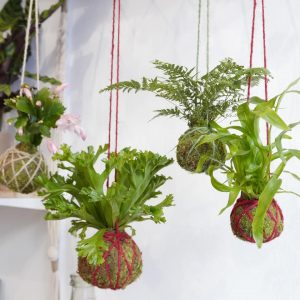 Workshop Kokedama tropicale @ WILD