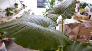 Wild Talk - La cura delle piante in casa. Incontro con il perito agrario @ WILD