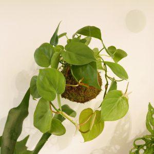 Workshop Kokedama pianta ricadente SOLD OUT @ WILD