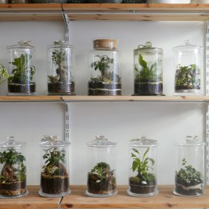 Workshop Terrarium chiuso @ WILD
