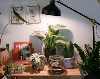 Lampadina a LED per piante a spettro bianco